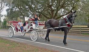 Carriage Horse1